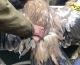 """Служители от зоопарка в Злин, Чехия дариха още 2 лешояда на волиерата в Природен парк """"Сините камъни"""""""